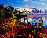The Volcanic Mountains reflected in Upper Twin Lake with autumn tundra of Dwarf Birch with a few White Spruce, Lake Clark National Park, Alaska.
