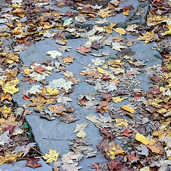 Leaves of slate walking steps along the Falls Trail in Ricketts Glen State Park, Benton, PA, USA