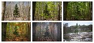 Seasons During Covid-19