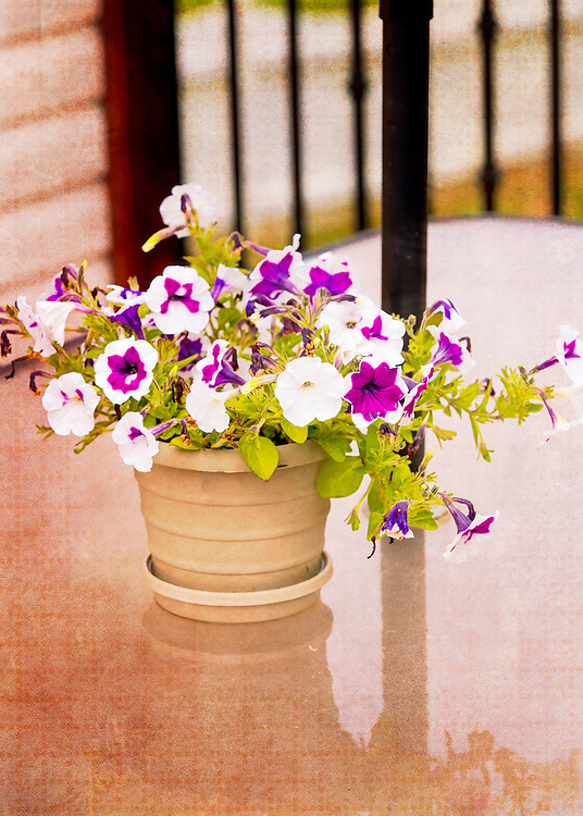 A Pot Of Summer Flowers Add Color To The Patio Table