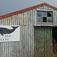 An anti-whaling sign adorns an abandoned shed on Carcass Island in Britain's Falkland Islands.