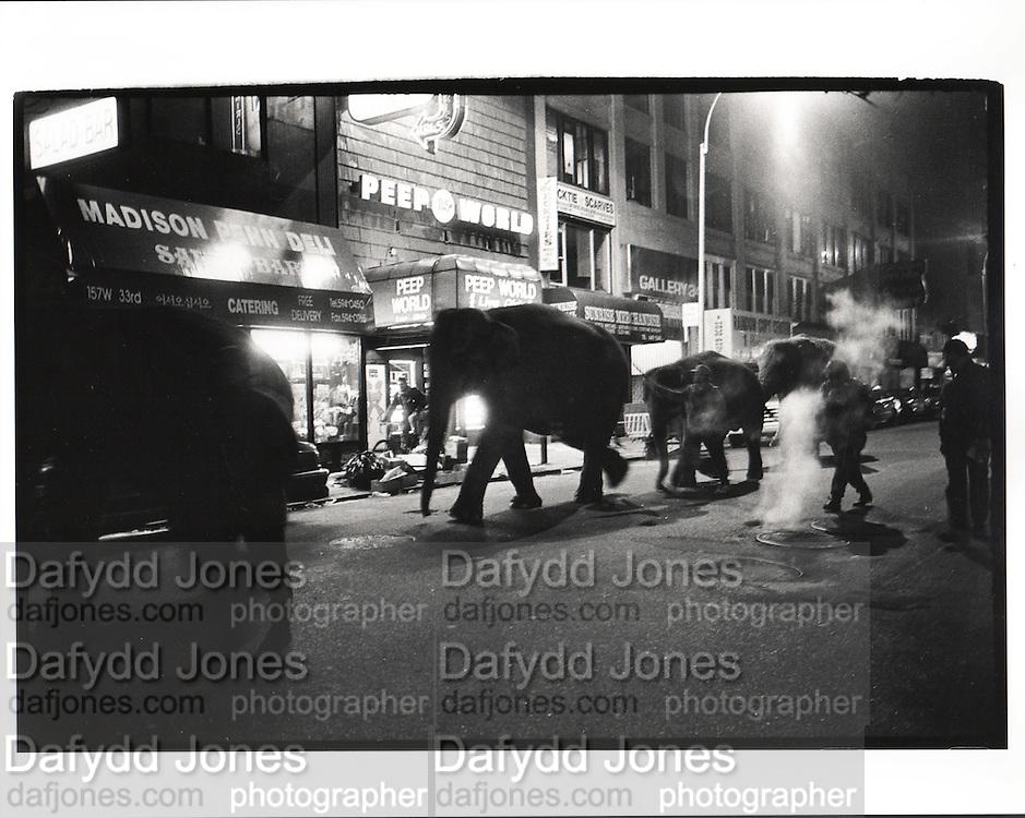 Elephants walking through midtown Manhattan at 1. a.m. to the Circus. 1993