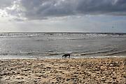 Nederland, The Netherlands, Zandvoort, 27-3-2016 Aan het strand langs de Noordzee van Zandvoort. Het is paasweekend en daardoor zijn er veel toeristen, vooral uit duitsland . Foto: Flip Franssen/HH