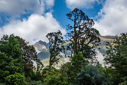 Lush temperate rainforest near Hidden Falls Swing Bridge on Hollyford Track, Fiordland National Park, Southland region, South Island of New Zealand. We enjoyed an easy 3-day version of the Hollyford Track: Day 1: fly from Milford Sound to Martins Bay, walk to its oceanfront Hut, and see New Zealand fur seals. Day 2: jetboat on Lake McKerrow to Pyke River Confluence, hike to Hidden Falls Hut for overnight lodging. Day 3: tramp out to Hollyford Road end to our prearranged car shuttle. In 1990, UNESCO honored Te Wahipounamu - South West New Zealand as a World Heritage Area.