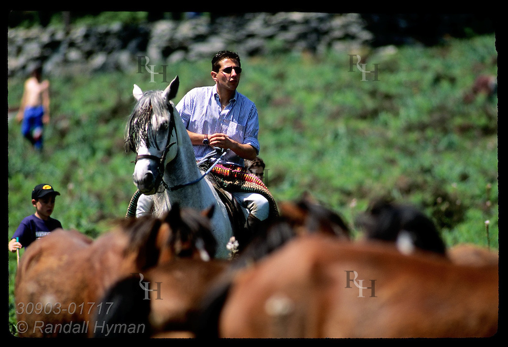 Horseman watches wild horses he has shepherded from high-country pastures to mountain corral during annual roundup; Galicia,Spain