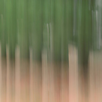 """""""Whisper of the Pines""""<br /> <br /> In the stillness, all you can hear is the whisper of the pines, in this pine forest abstract!!<br /> <br /> Nature Abstracts by Rachel Cohen"""