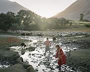 Returning home with calves. The traditional life of the Wakhi people, in the Wakhan corridor, amongst the Pamir mountains.