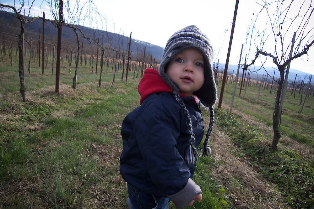 Child in vineyard