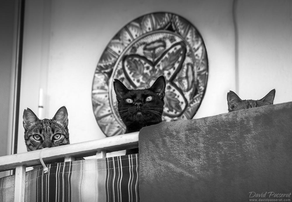 Three cats looking from a balcony.