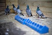 The birds await their food
