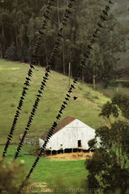 Birds gather on power lines in Pescadero, California. USA.