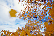 Fall Color Nature and Landscape Prints