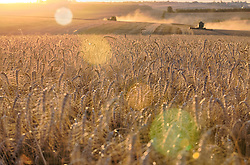 Lavoura de trigo ao por do sol na área rural de Cruz Alta, no Rio Grande do Sul. FOTO: Jefferson Bernardes / Agência Preview