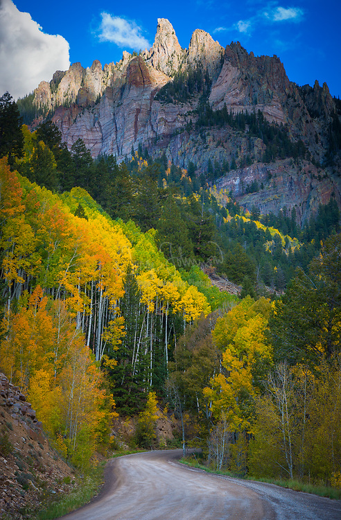Aspens on hillside in the San Juan mountains of Colorado with Silver Mountain peak in the background