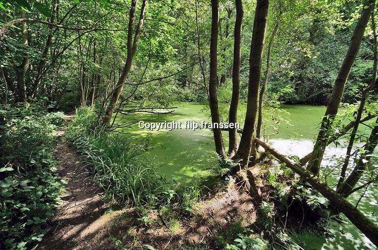 Nederland, Ubbergen, 29-7-2020  Serie over de natuur rond het bronnenbos van woongemeenschap de Refter . Door de ligging aan de voet van de stuwwal van Nijmegen, Groesbeek, is er veel vocht en water . Hierdoor komt er een vegetatie voor die gedijt bij de natte ondergrond . Ook zijn er wetlands en beekjes die het water afvoeren naar de afwatyering van de ooijpolder .Foto: ANP/ Hollandse Hoogte/ Flip Franssen