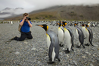 Russell Laman photographing King Penguins (Aptenodytes patagonicus)<br />