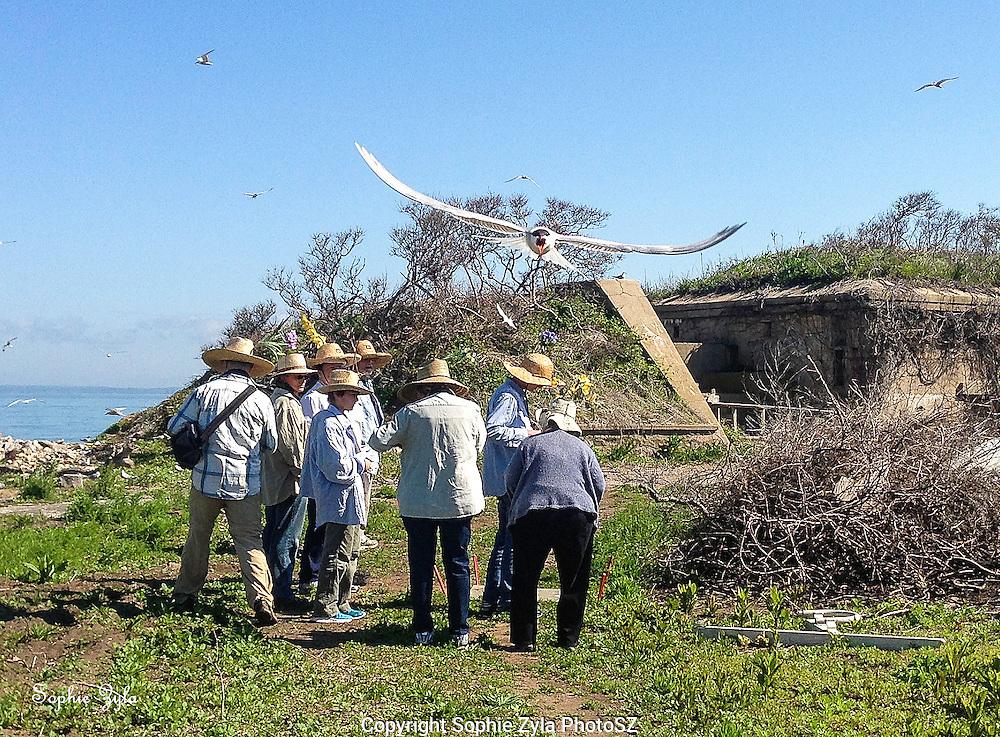 Common Tern welcome and GGI work crew