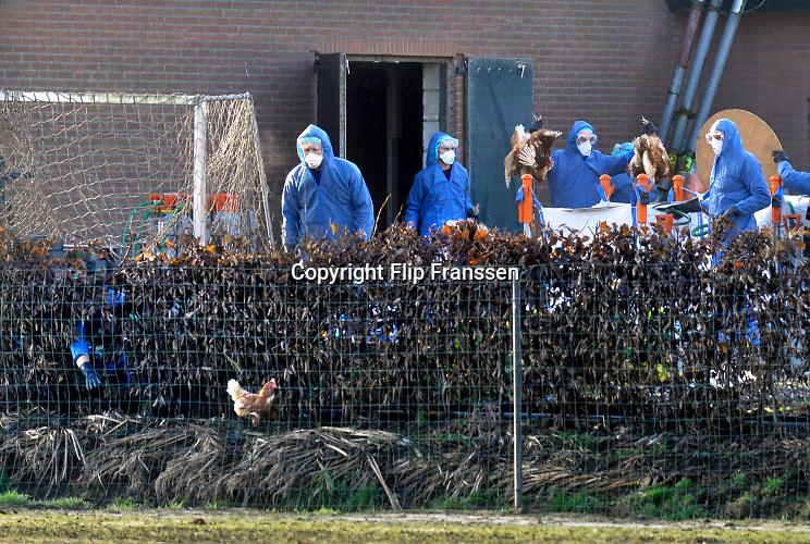 Nederland, the Netherlands,Boven-Leeuwen, 20-12-2016Op een kippenboerderij in dit dorp in het land van Maas en Waal is vogelgriep geconstateerd. Het bedrijf wordt geruimd, evenals twee anderen in de straal van 1 km. De dieren worden dmv CO2 vergast en in grote zakken gestopt . Een kip weet te ontsnappen, maar wordt uiteindelijk toch weer gevangen .Foto: Flip Franssen