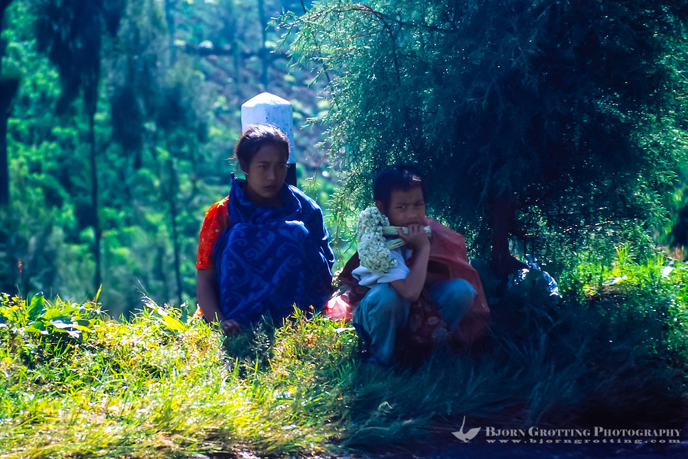 Java, East Java, Bromo Tengger. Two local children selling dried flowers at the Bromo crater rim. Anaphalis javanica or Javanese Edelweiss is now probably extinct in this area.