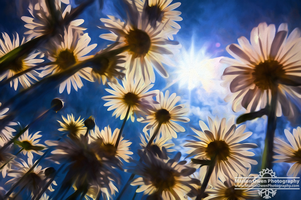 Painterly abstract of daisies
