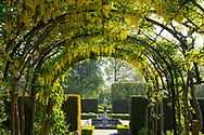 A laburam arch leading to a statue and fountain in Kew Gardens, London, UK