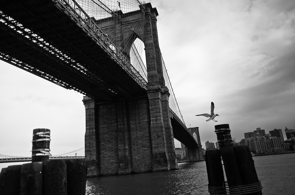 A seagull lands on the banks of the East River in South Manhattan, besides the Brooklyn Bridge, New York, 2010.