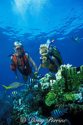 Molasses Reef, Key Largo, Florida Keys National Marine Sanctuary, Florida ( Western Atlantic Ocean ) MR 70, MR 71