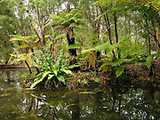Ferns and trees thrive at a garden pond in Ku-ring-gai Chase National Park, 25 km north of Sydney, in New South Wales, Australia.
