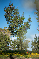 28 February 2020, Jerusalem: A tree grows in the Lutheran World Federation campus on the Mount of Olives. The Lutheran World Federation campus, including the Augusta Victoria Hospital campus, is one of few green areas still remaining in East Jerusalem.