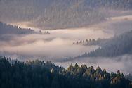 Morning fog in forest valley, Santa Cruz Mountains, Santa Cruz County, California