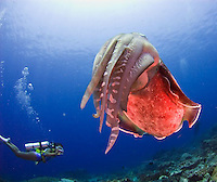 The unuual land and marine life in the Komodo National Park in Nusa Tenggara, Indonesia includes the carnivorous Komodo National Park, Indonesia.