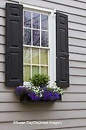 66512-00112 Window box with pansies and lobelias, Charleston, SC