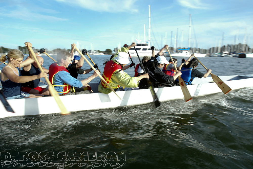 A dragon boat racing team practices at the marina in Berkeley, Calif., Thursday, June 1, 2006. (Photo by D. Ross Cameron)