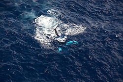 Whales Whales off the Mozambique coast