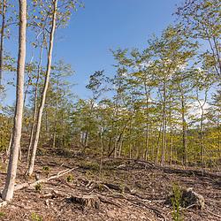 43.47312, -71.16884. Birch Ridge location F. Facing south. New Durham, New Hampshire.