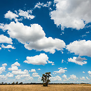 Lone tree in field under huge sky in Australian outback