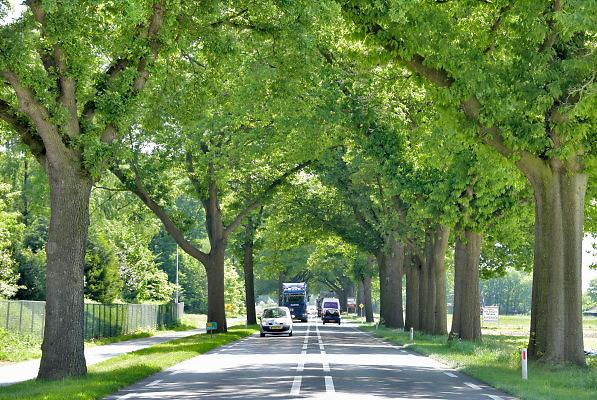 Nederland, Well, 9-5-2018Proviciale weg N271 met mooie grote bomen langs de klant. Voor de verkeersveiligheid wil men de karakteristieke bomenrij langs dit soort wegen weghalen. Foto: Flip Franssen
