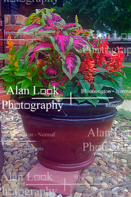 30 June 2014:   coleus and other flowers in a potted arrangement<br /> <br /> <br /> This image was produced in part utilizing High Dynamic Range (HDR) processes.  It should not be used editorially without being listed as an illustration or with a disclaimer.  It may or may not be an accurate representation of the scene as originally photographed and the finished image is the creation of the photographer. This image was produced in part utilizing High Dynamic Range (HDR) or panoramic stitching or other computer software manipulation processes. It should not be used editorially without being listed as an illustration or with a disclaimer. It may or may not be an accurate representation of the scene as originally photographed and the finished image is the creation of the photographer.