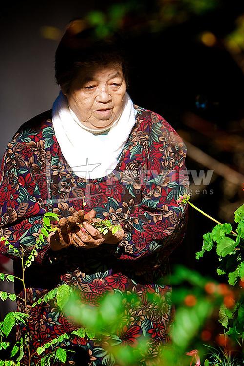 Yasue Ozaki, matriarca da família que desembarcou no Estado pelo porto de Rio Grande, em 13 de maio de 1960 vindo diretamente do Japão para instalar-se na colônia japonesa de Ivoti. FOTO: Itamar Aguiar/ Agência Preview
