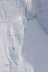 Petrel and iceberg, Antarctica