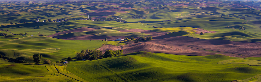 Panoramic shot of the rolling hills of the Palouse region in Eastern Washington.  Shot from Steptoe Butte.