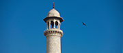 Black kite bird soaring by a minaret of The Taj Mahal mausoleum in Agra, Uttar Pradesh, India