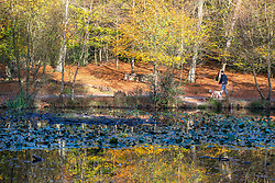 © Licensed to London News Pictures. 27/10/2014. Burnham, UK. A man walks his dog along a pond reflecting autumn colour from trees on the bank.  People walk through the autumnal trees in the mooring sunshine at Burnham Beeches an area of 220 hectares of ancient woodland in Burnham, Buckinghamshire. Today 27th October 2014. Photo credit : Stephen Simpson/LNP