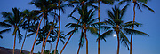 Coconut palms with full moon<br />