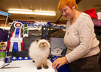 """Seal Point Hymalayan """"Penuchi"""" with Suzanne Tessier from Canada during Saturday's Cat Show at the Laconia VFW Hall.  Karen Bobotas/for the Laconia Daily Sun)"""