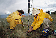 Lightning research. Scientists prepare a rocket designed to fly into a thunderstorm and trigger a bolt of lightning. The rocket trails a fine copper wire, providing an easy path for the lightning to reach Earth. This allows the scientists to measure the current, voltage and other parameters of the lightning bolts. To ensure safety, the rocket is launched by blowing through a tube to activate a pneumatic switch. This prevents the operator from making accidental electrical contact with the lightning. Photographed at Mount Baldy, New Mexico USA.