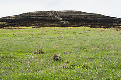 Prairie grasses in the Kansas Flint Hills, like this prairie hilltop in the Tallgrass Prairie National Preserve, are intentionally burned by land mangers and cattle ranchers in the spring to prepare the land for cattle grazing and help maintain a healthy tallgrass prairie ecosystem. Less than four percent of the original 140 million acres of tallgrass prairie remains in North America. Most of the remaining tallgrass prairie is in the Flint Hills in Kansas. The prairie has survived here because the soil is heavily laden with limestone and chert (commonly called flint) making it unsuitable for plowing. This rocky soil, combined with a cycle of wildfires and animal grazing has preserved the tallgrass prairie. The 10,894-acre Tallgrass Prairie National Preserve is located in Chase County near the towns of Strong City and Cottonwood Falls. Less than four percent of the original 140 million acres of tallgrass prairie remains in North America. Most of the remaining tallgrass prairie is in the Flint Hills in Kansas. Tallgrass Prairie National Preserve is the only unit of the National Park Service dedicated to the preservation of the tallgrass prairie ecosystem. The Tallgrass Prairie National Preserve is co-managed with The Nature Conservancy.