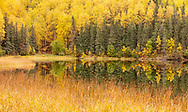 Fall colors line Gwen Lake near Eagle River in Southcentral Alaska. Afternoon.