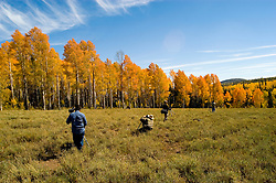 Photographer making images of Golden Aspen leaves, aspen trees in fall, white bark, autumn, fall leaves, fall color, Markagunt Plateau, Cedar Mountain, Hwy 132, Mile Marker 24, Dixie National Forest, Utah, UT, photographers, no model release, sightseeing, Image ut327-17490, Photo copyright: Lee Foster, www.fostertravel.com, lee@fostertravel.com, 510-549-2202