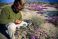 A man wearing sunglasses writes notes on a desert flower in Anza Borrego Desert State Park, California. Anza-Borrego Desert State Park is the largest state park in California. (releasecode: jk_mr1024) (Model Released)